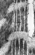 LECYTHIDACEAE Couratari guianensis