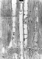 LAURACEAE Licaria cayennensis