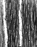 BURSERACEAE Protium beandou