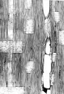 MELIACEAE Astrotrichilia normandii