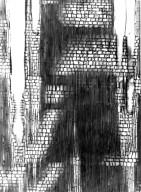RHAMNACEAE Ziziphus mucronata