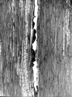 SAPINDACEAE Lepisanthes perrieri