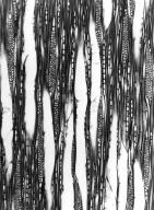 CUNONIACEAE Weinmannia humblotii