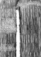 MALVACEAE DOMBEYOIDEAE Helmiopsiella madagascariensis