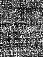 COMBRETACEAE Terminalia cyanocarpa