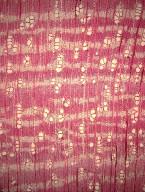 MALPIGHIACEAE Bunchosia nitida