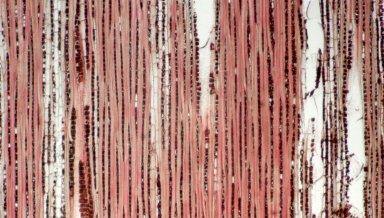 CHRYSOBALANACEAE Licania licaniaeflora