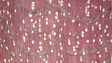 RUBIACEAE Alibertia myrciifolia