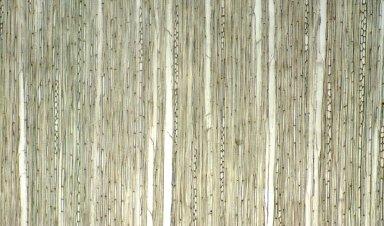 RUBIACEAE Poecilocalyx stipulosa