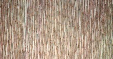 SCROPHULARIACEAE Aragoa lycopodioides