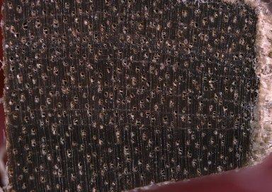 MELIACEAE Trichilia surinamensis