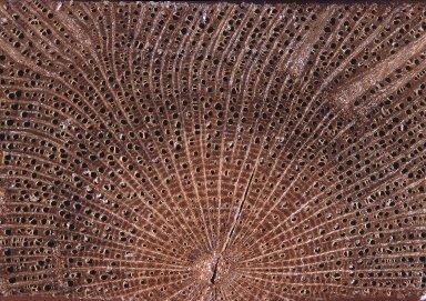 ANNONACEAE Monanthotaxis parvifolia