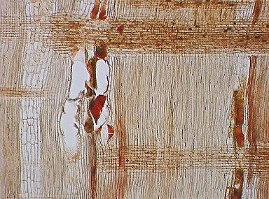 LEGUMINOSAE DETARIOIDEAE Guibourtia coleosperma