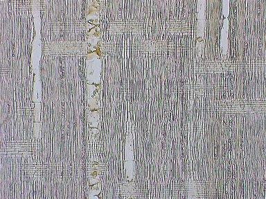 LEGUMINOSAE PAPILIONOIDEAE Dalbergia decipularis