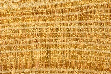 CELASTRACEAE Cassine peragua