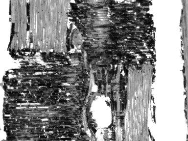 LECYTHIDACEAE Petersianthus quadrialatus