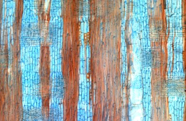 LEGUMINOSAE PAPILIONOIDEAE Pericopsis mooniana