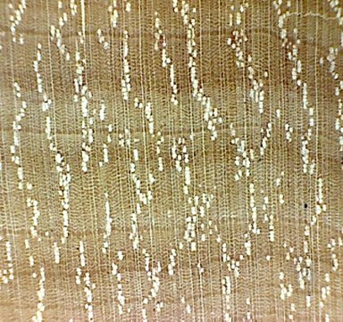 SAPOTACEAE Chrysophyllum analalavense