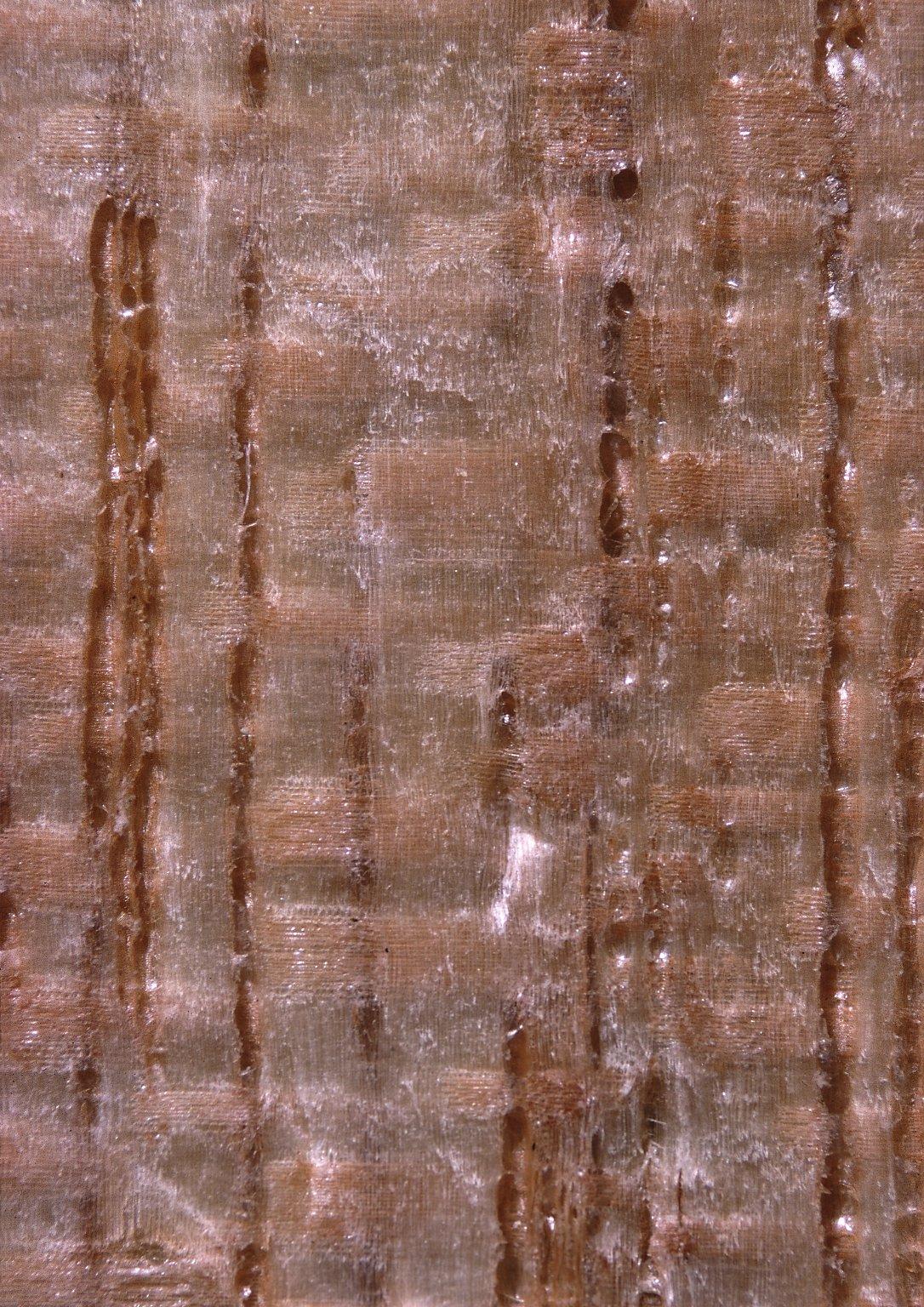ANACARDIACEAE Tapirira guianensis
