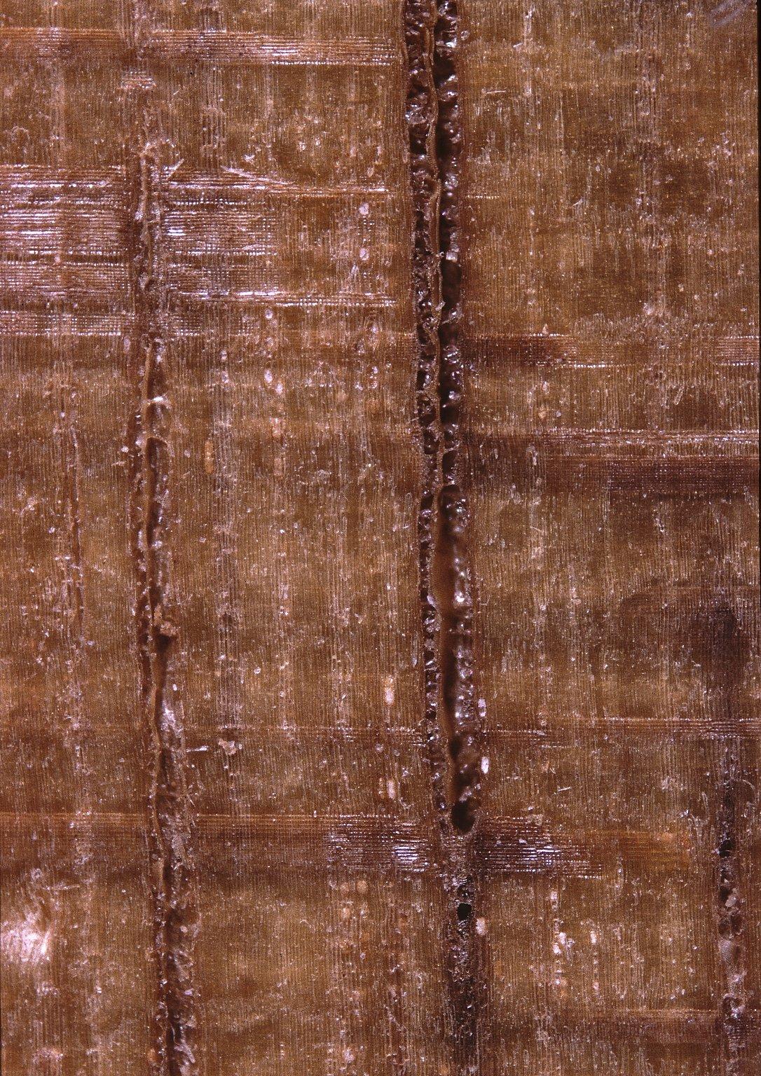 HERNANDIACEAE Sparattanthelium guianense