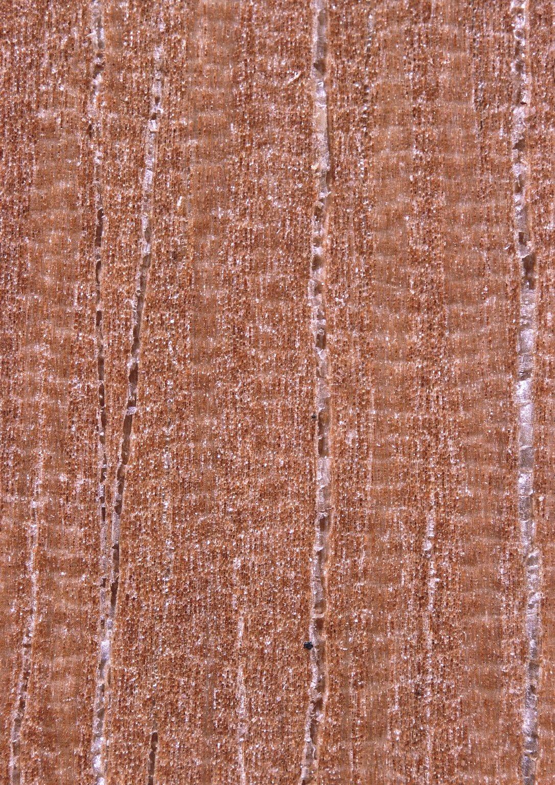 LEGUMINOSAE CAESALPINIOIDEAE Bauhinia thonningii