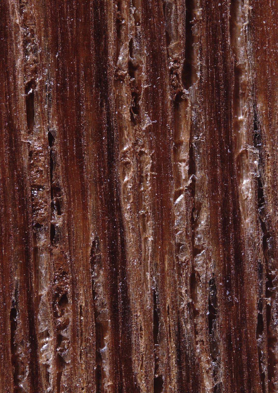 DIPTEROCARPACEAE Dipterocarpus alatus